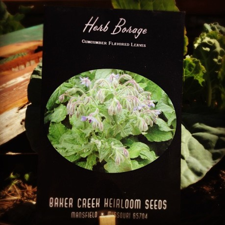 Heirloom Borage Seeds | Baker Creek