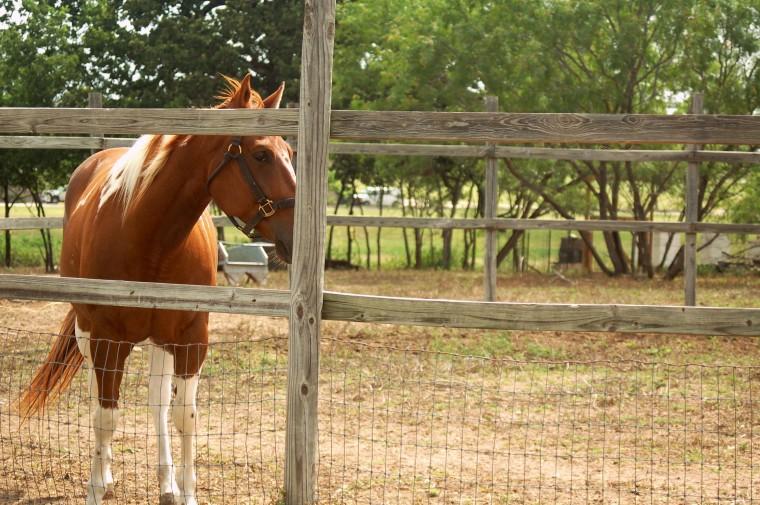 horseGG